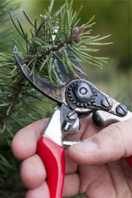 tree-pruning-trimming-care